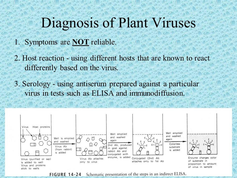 Diagnosis of Plant Viruses