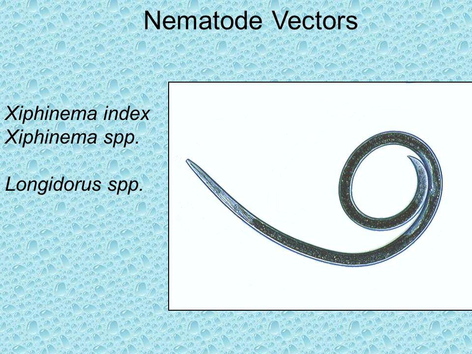 Nematode Vectors Xiphinema index Xiphinema spp. Longidorus spp.