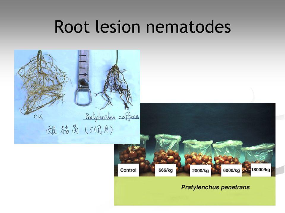 Root lesion nematodes