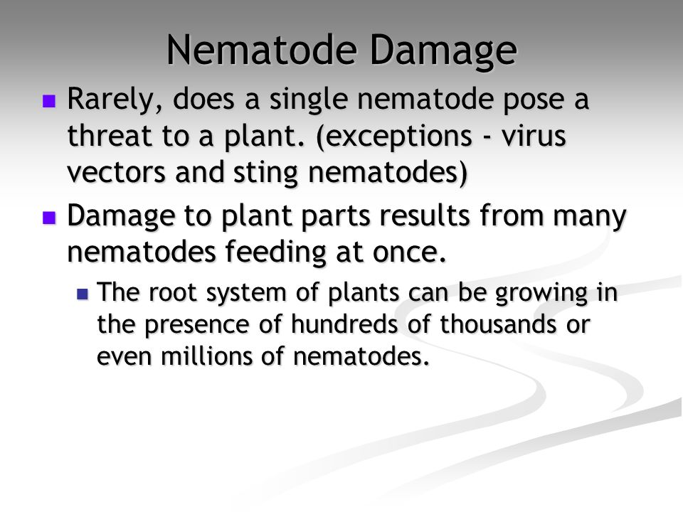 Nematode Damage Rarely, does a single nematode pose a threat to a plant. (exceptions - virus vectors and sting nematodes)