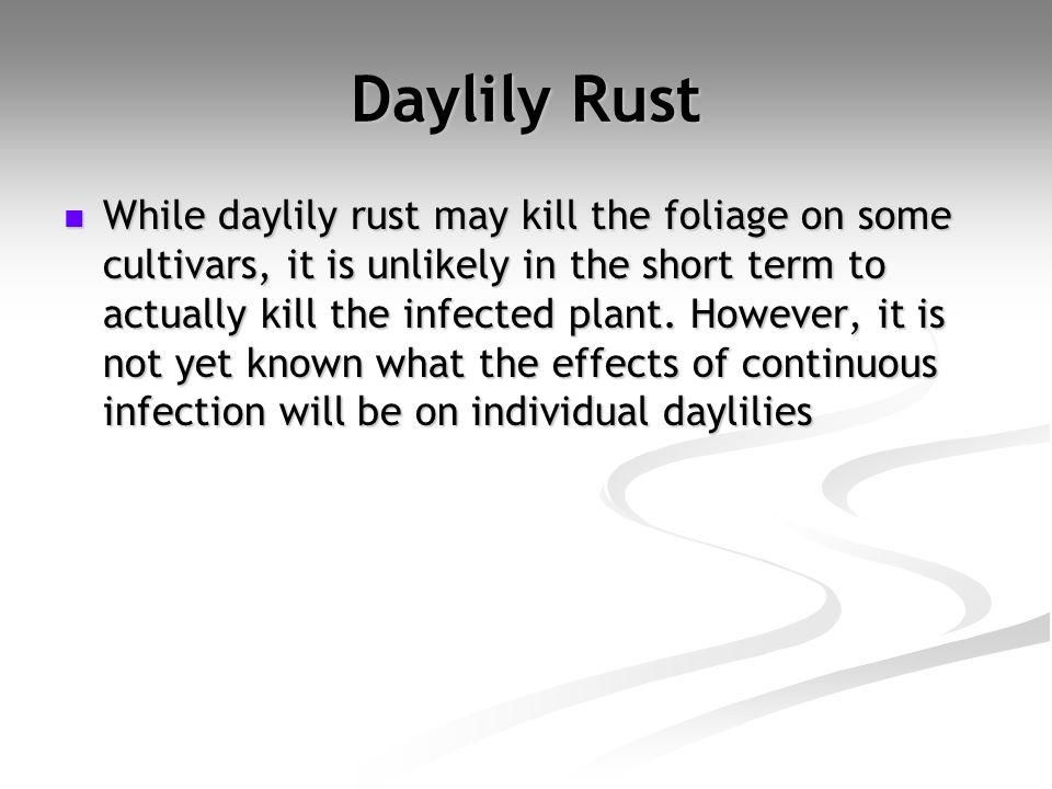 Daylily Rust