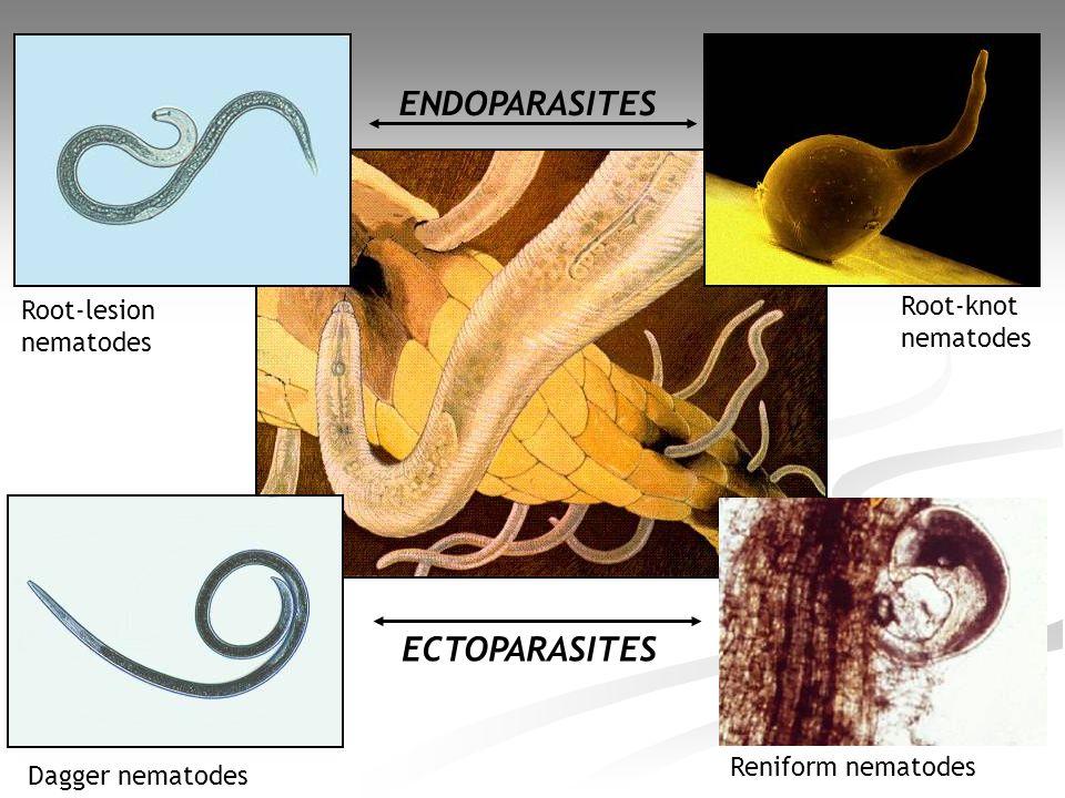 ENDOPARASITES ECTOPARASITES Root-knot Root-lesion nematodes nematodes