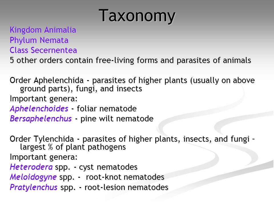 Taxonomy Kingdom Animalia Phylum Nemata Class Secernentea