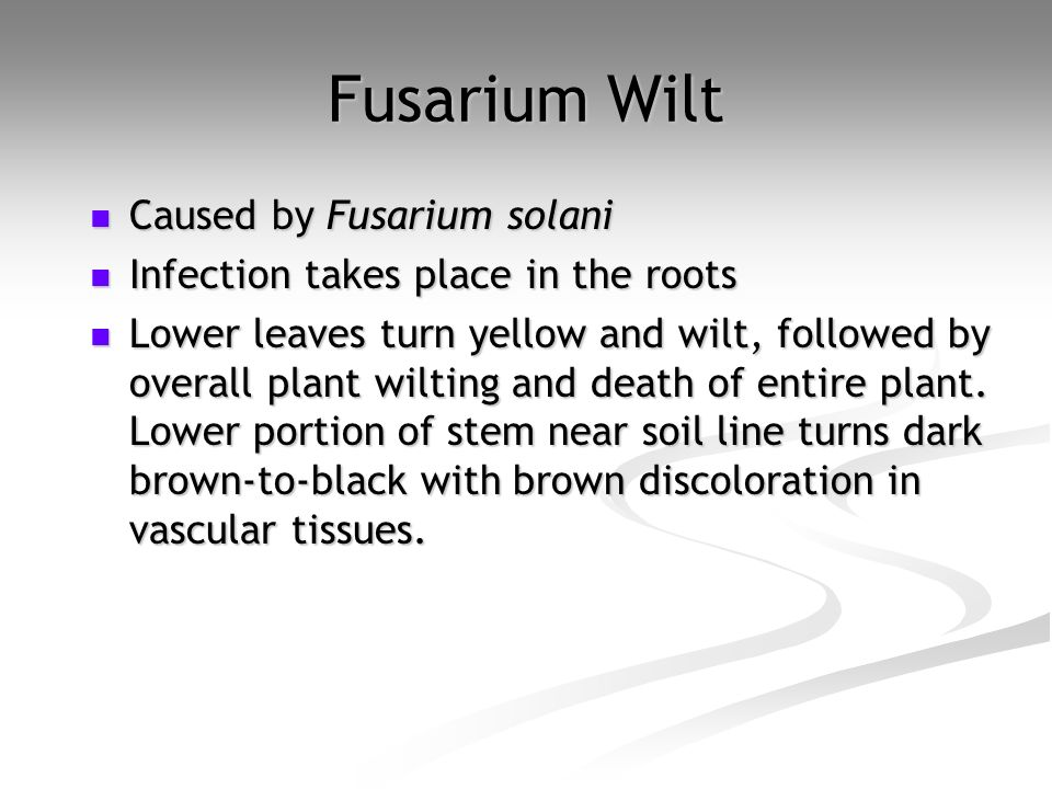 Fusarium Wilt Caused by Fusarium solani
