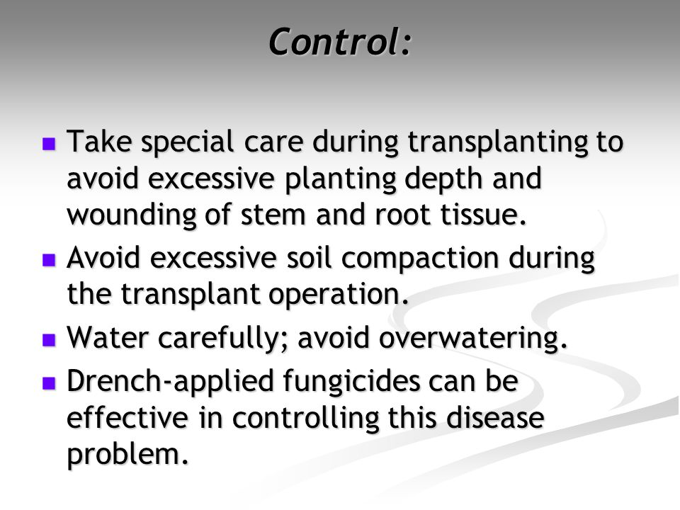 Control: Take special care during transplanting to avoid excessive planting depth and wounding of stem and root tissue.