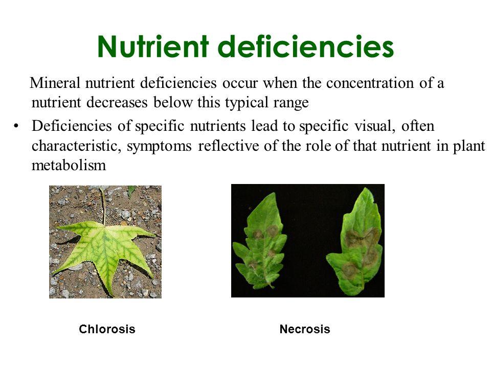 plant nutrient deficiency symptoms pdf