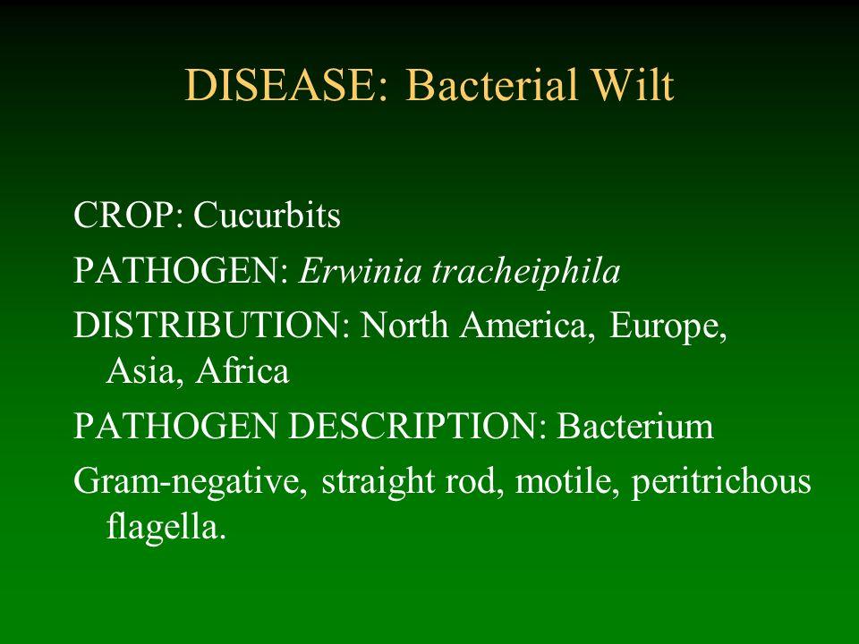 DISEASE: Bacterial Wilt