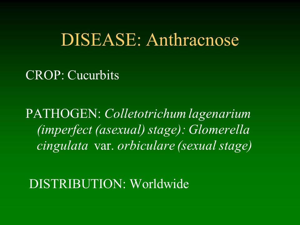 DISEASE: Anthracnose CROP: Cucurbits