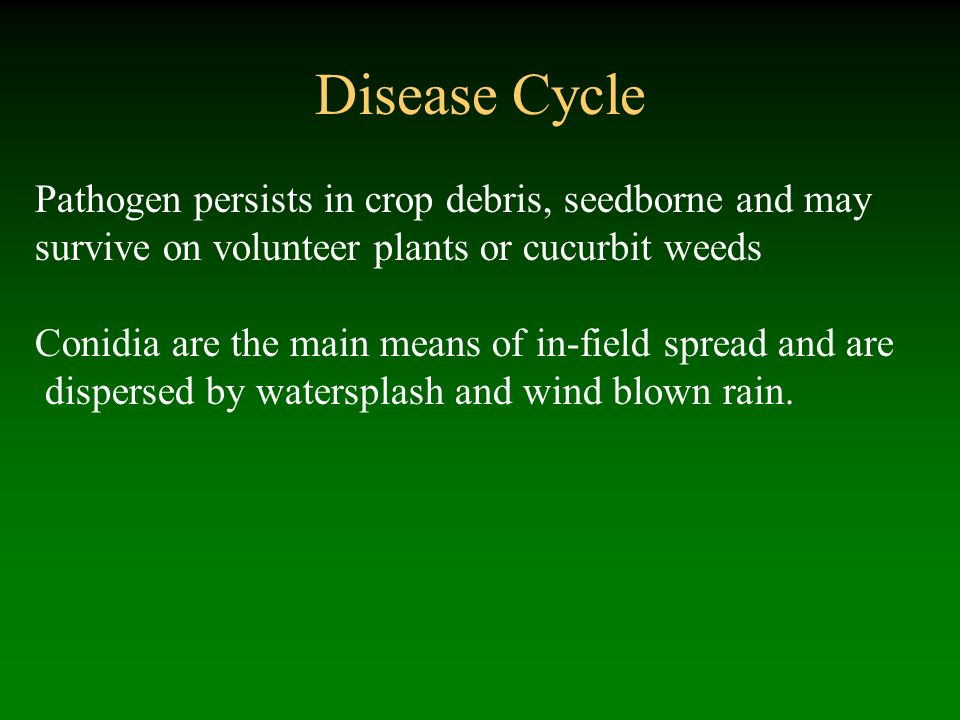 Disease Cycle Pathogen persists in crop debris, seedborne and may