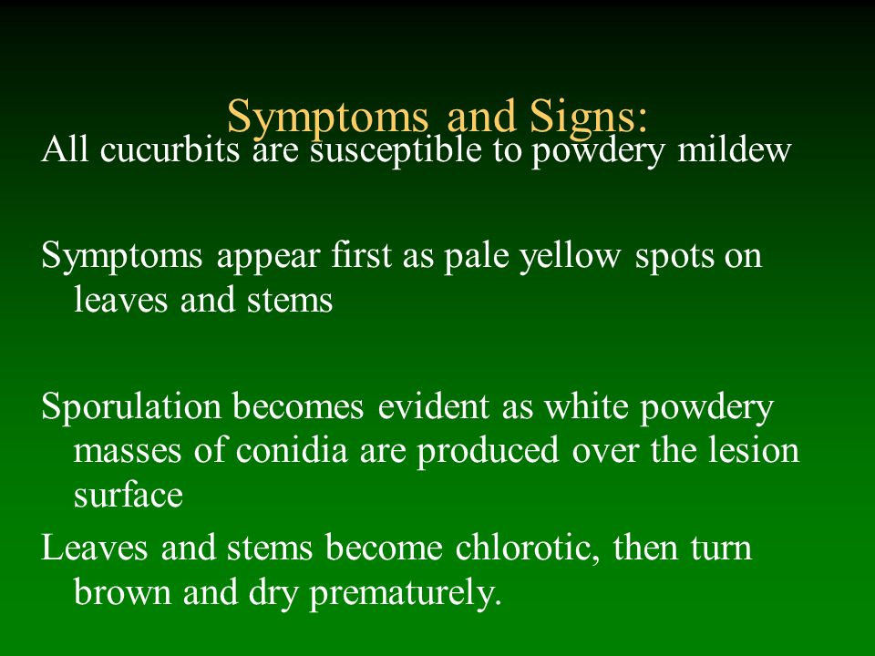 Symptoms and Signs: All cucurbits are susceptible to powdery mildew