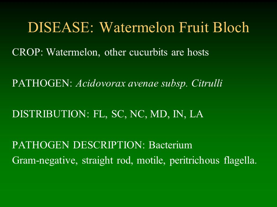 DISEASE: Watermelon Fruit Bloch
