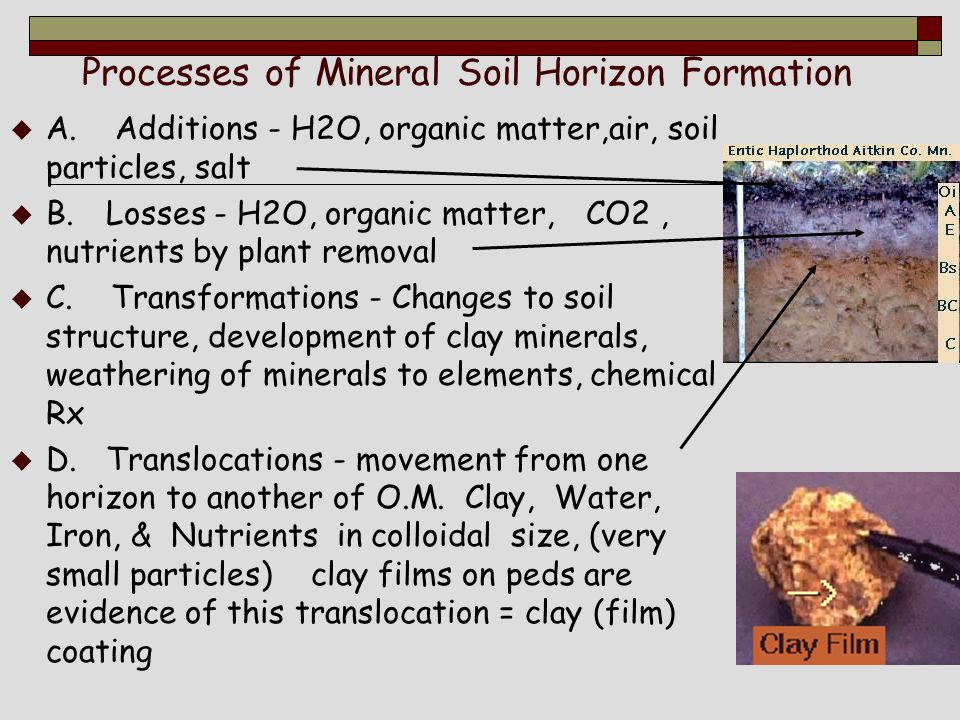 Lecture 3a naming soil horizons ppt video online download for Soil forming minerals