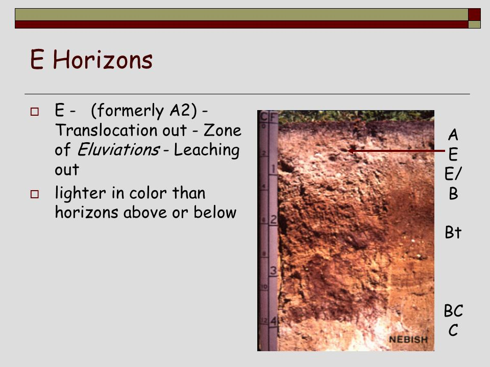 Lecture 3a naming soil horizons ppt video online download for Soil zone of accumulation