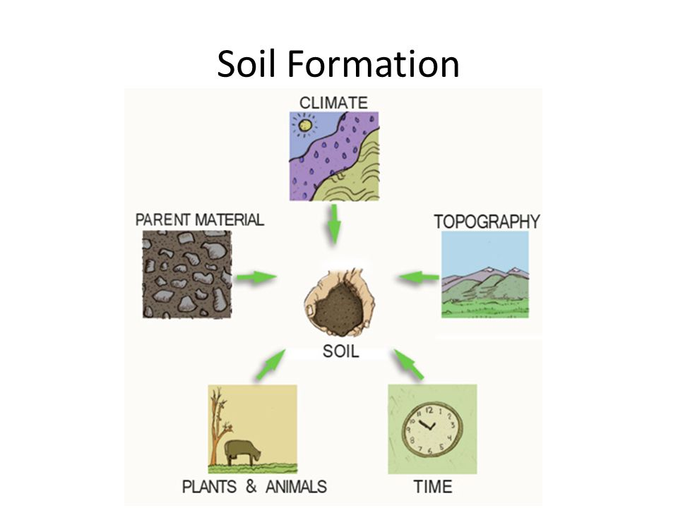 Soils ppt download for Soil formation