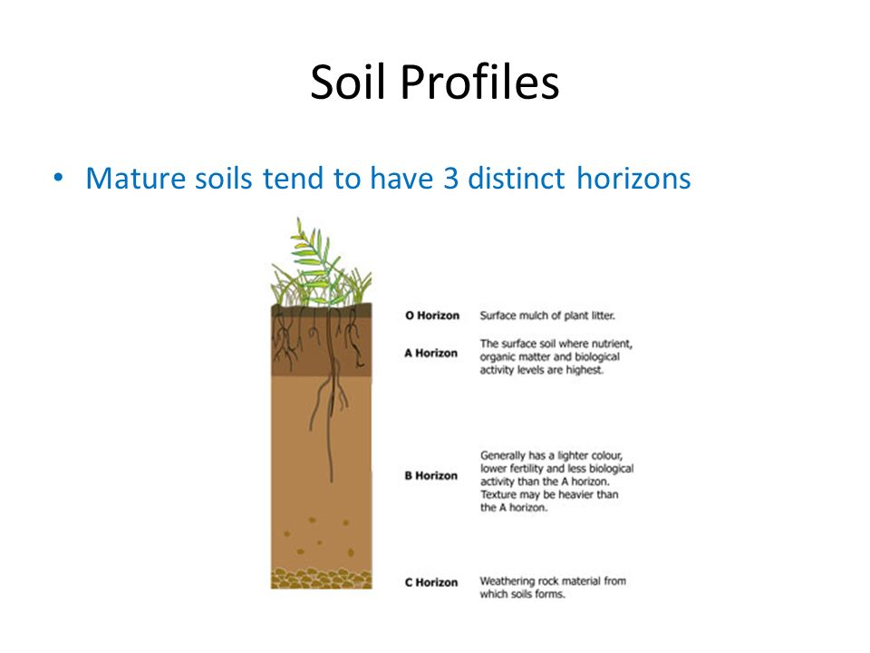 Soils ppt download for What is important to know about soil layers