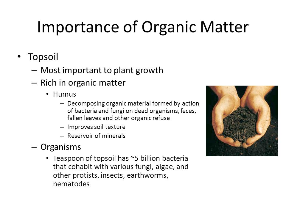 Plant nutrition chapter ppt video online download for Importance of soil minerals