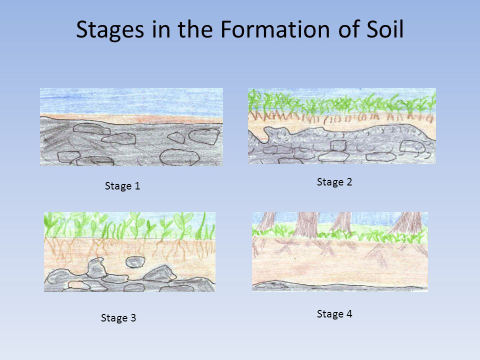 By stephanie bales kelley fox and courtney dunford for Explain the formation of soil