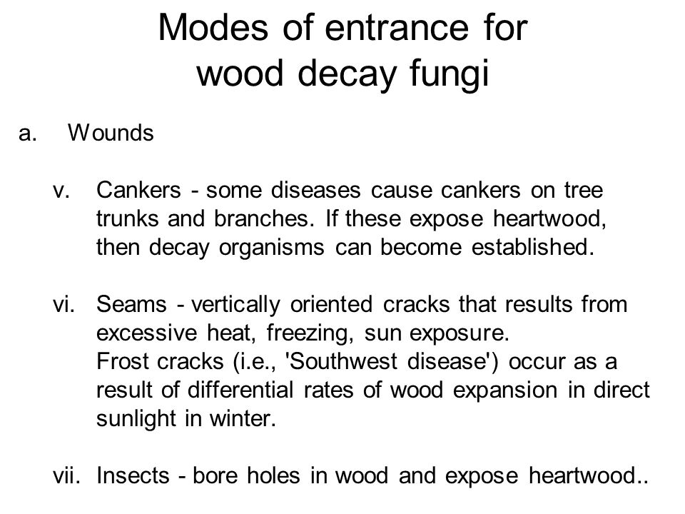 Modes of entrance for wood decay fungi