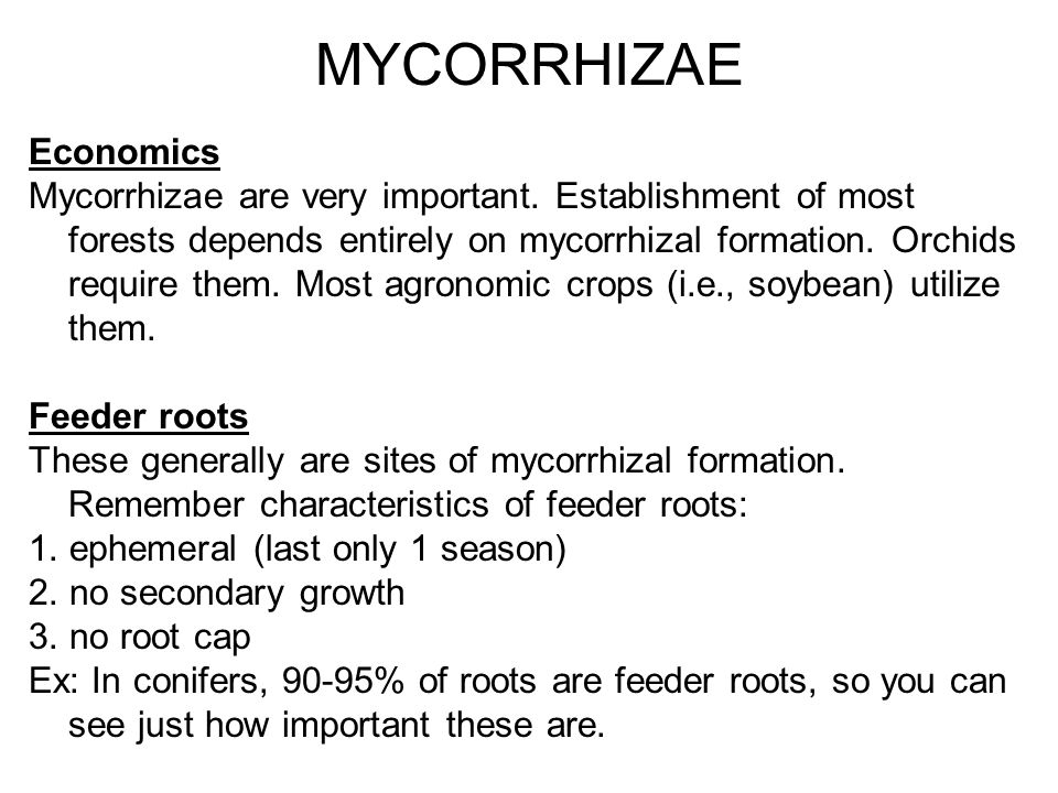 MYCORRHIZAE Economics