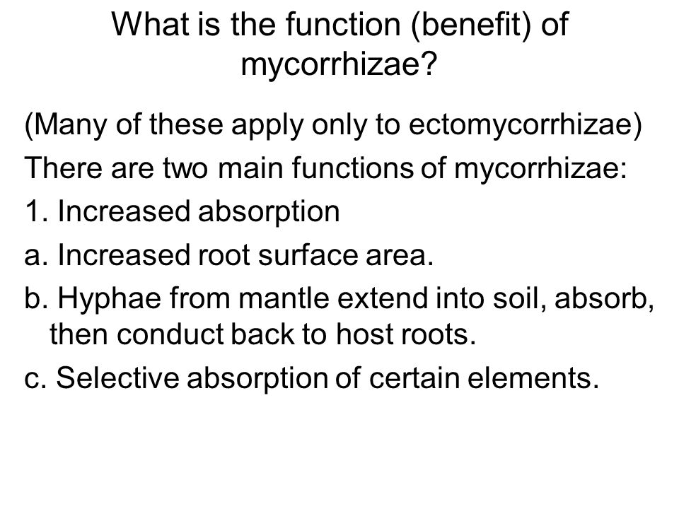 What is the function (benefit) of mycorrhizae