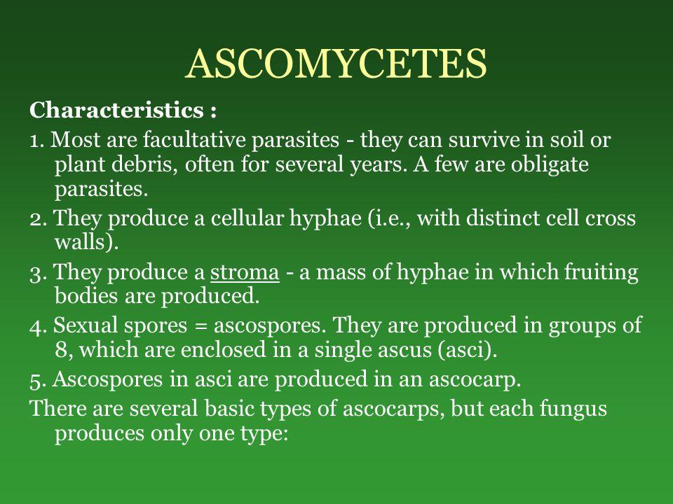 ASCOMYCETES Characteristics :