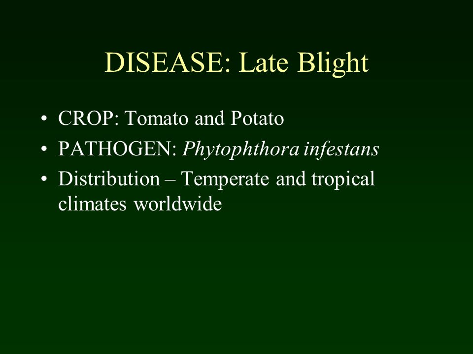 DISEASE: Late Blight CROP: Tomato and Potato