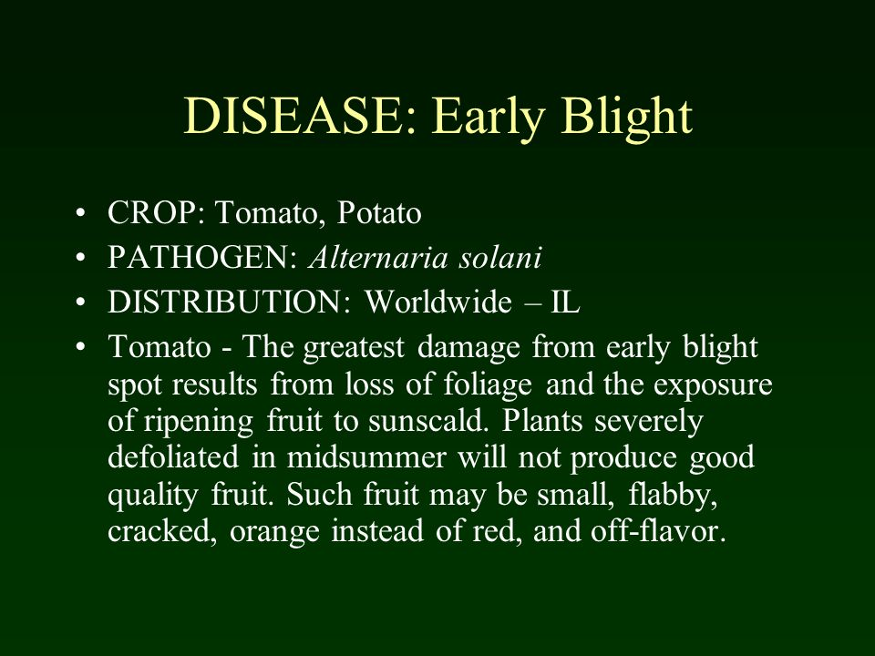 DISEASE: Early Blight CROP: Tomato, Potato PATHOGEN: Alternaria solani