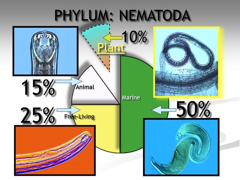 50% 10% 15% 25% Plant Animal Free-Living Marine PHYLUM: NEMATODA