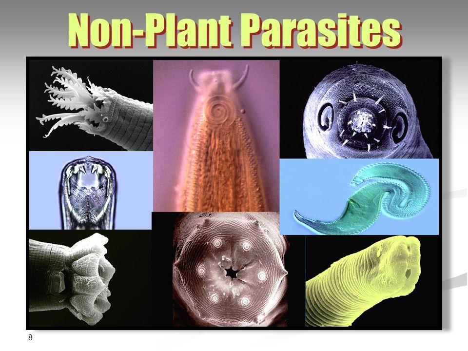 Non-Plant Parasites