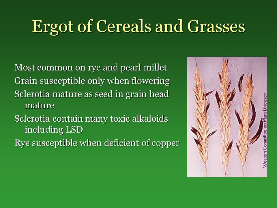 Ergot of Cereals and Grasses