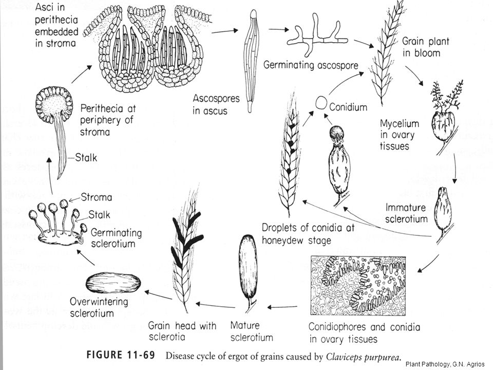 Plant Pathology, G.N. Agrios