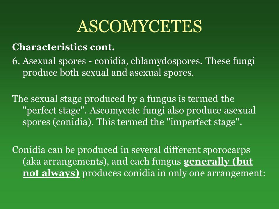 ASCOMYCETES Characteristics cont.