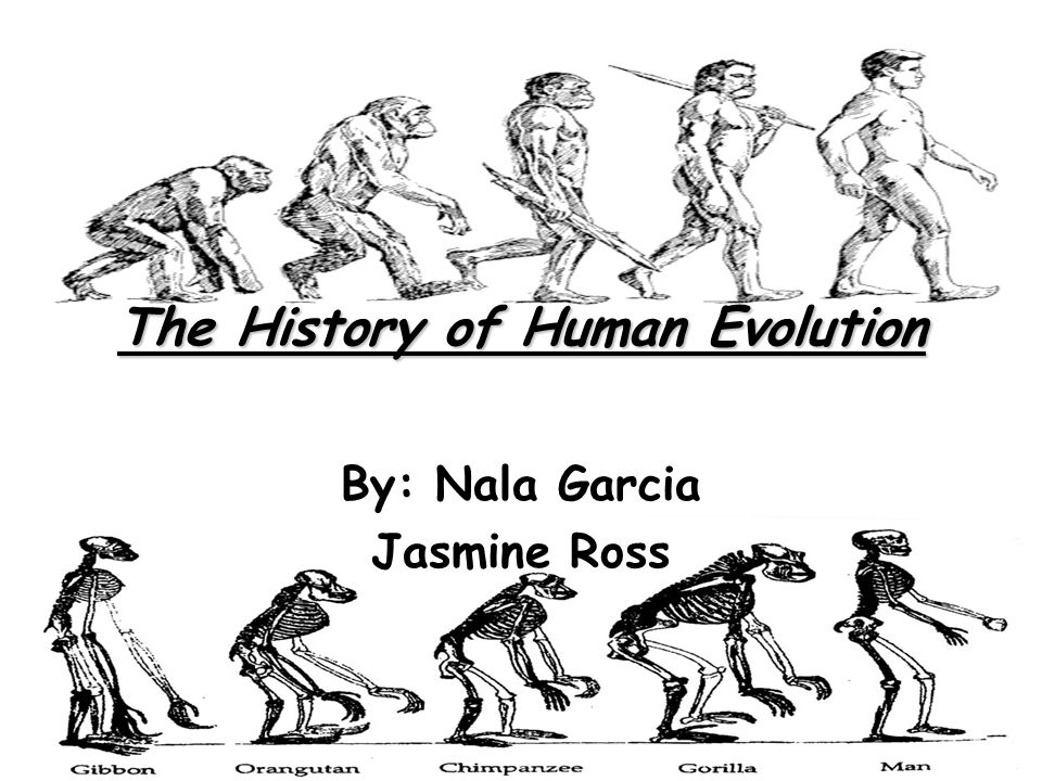 a history of human evolution Human evolution is the evolutionary process that led to the emergence of anatomically modern humans, beginning with the evolutionary history of primates – in particular genus homo – and leading to the emergence of homo sapiens as a distinct species of the hominid family, the great apes.
