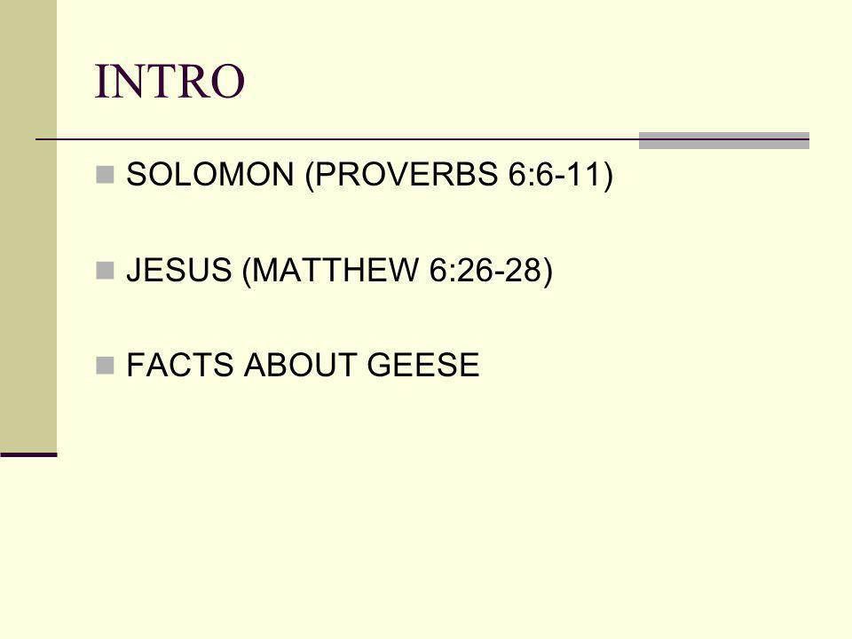 INTRO SOLOMON (PROVERBS 6:6-11) JESUS (MATTHEW 6:26-28)
