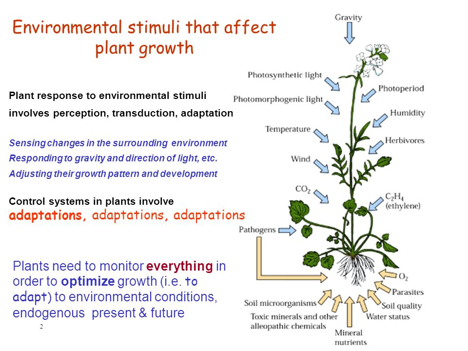 a study on growth and developmental plant responses to light and nutrients Plant hormones and responses study guide key concept plant hormones guide plant growth and development growth in response to light.