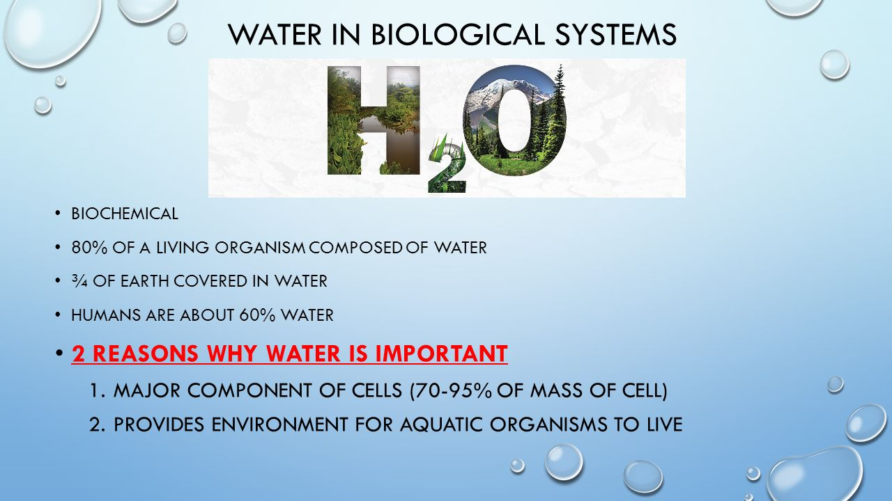 biological importance of water New age of water entire biochemistry and cell biology textbooks will have to be  rewritten on how water in the cell and extracellular matrix is.