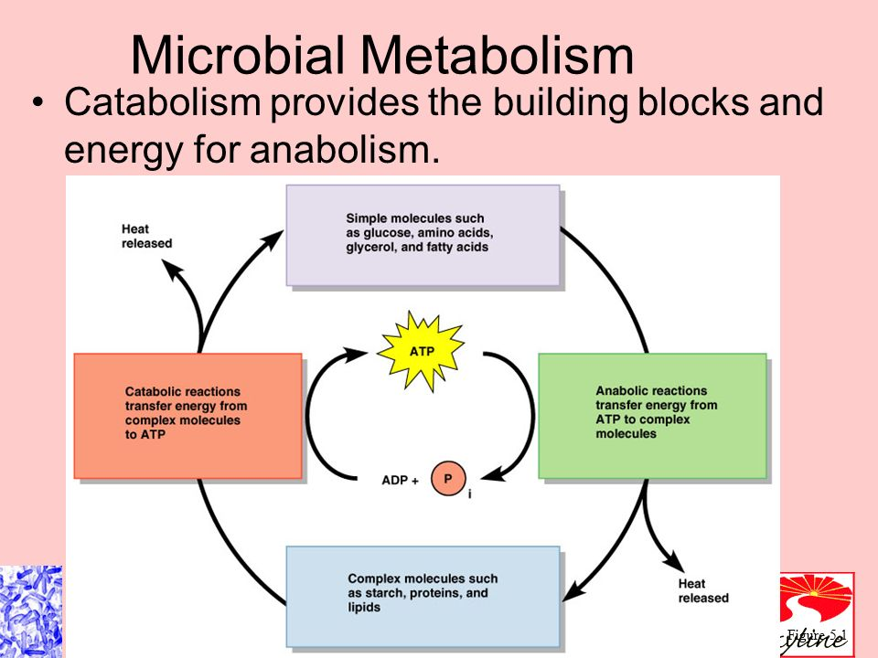 metabolic practical considerations microbial electrosynthesis This has been termed microbial electrosynthesis metabolic and practical considerations on microbial electrosynthesis curr opin biotechnol 22: 371–377.