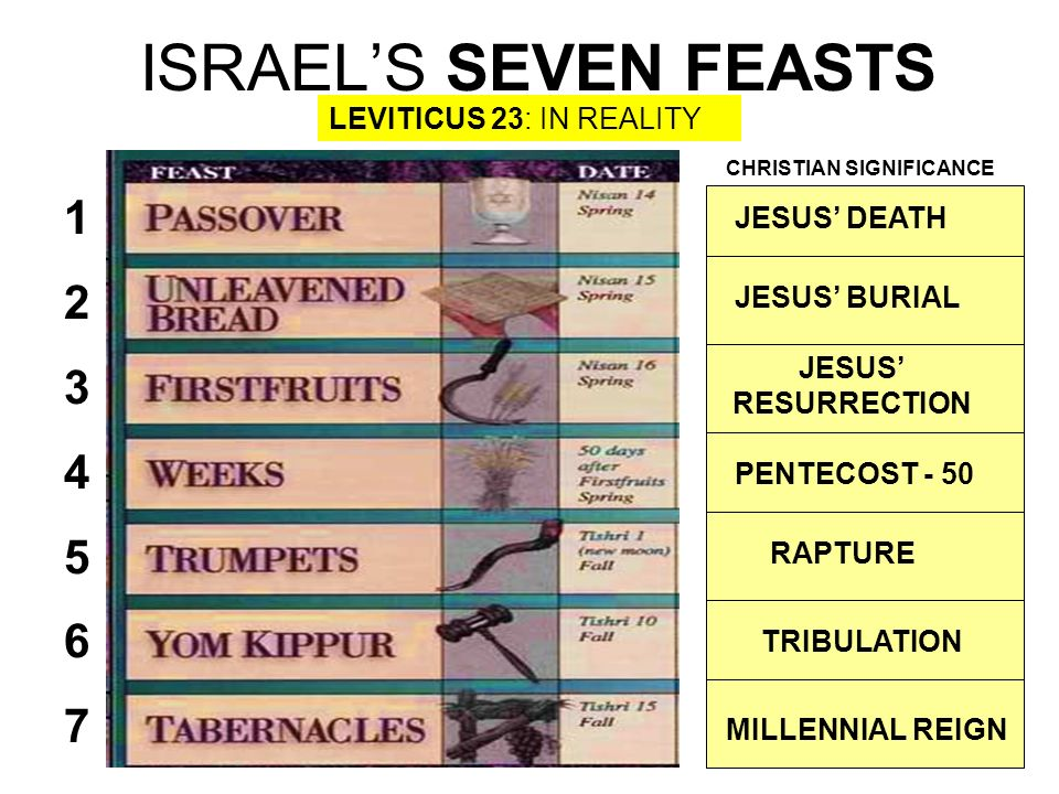ISRAEL'S SEVEN FEASTS 1 2 3 4 5 6 7 LEVITICUS 23: IN REALITY