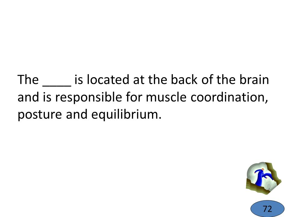 The ____ is located at the back of the brain and is responsible for muscle coordination, posture and equilibrium.