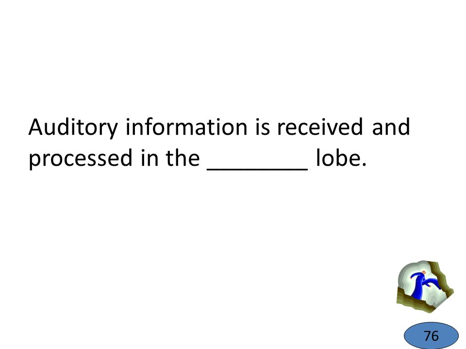 Auditory information is received and processed in the ________ lobe.