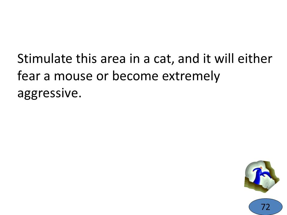 Stimulate this area in a cat, and it will either fear a mouse or become extremely aggressive.