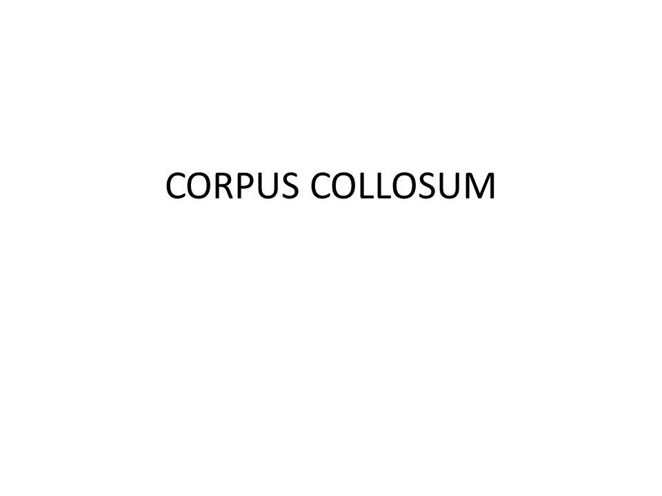 CORPUS COLLOSUM