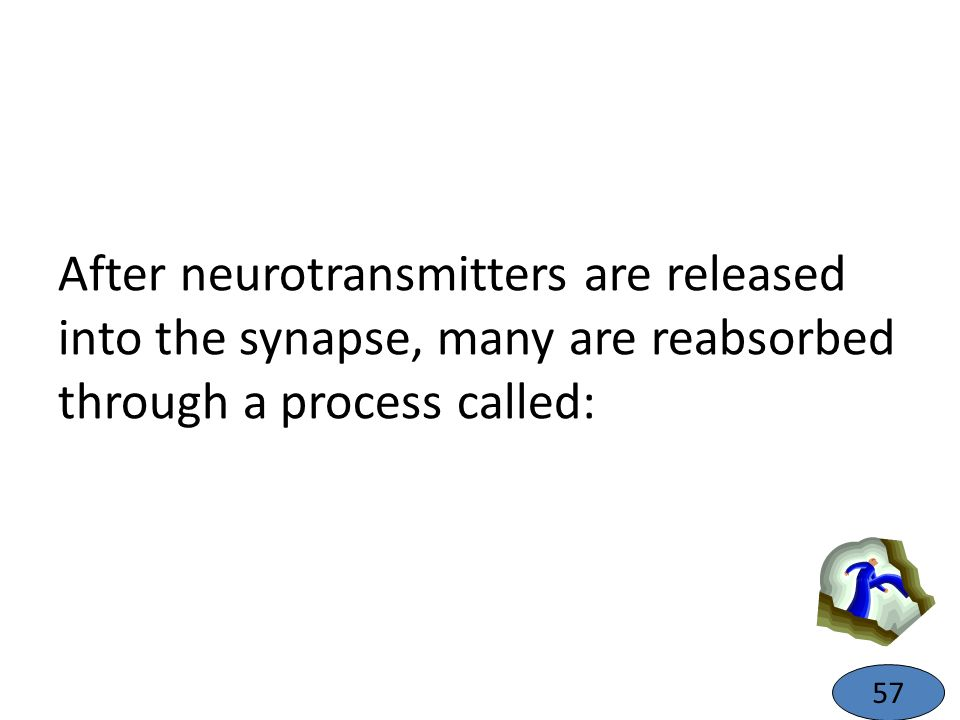 After neurotransmitters are released into the synapse, many are reabsorbed through a process called: