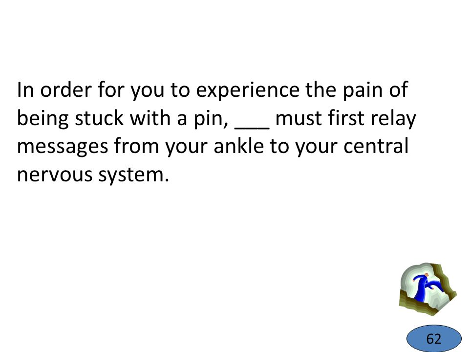 In order for you to experience the pain of being stuck with a pin, ___ must first relay messages from your ankle to your central nervous system.