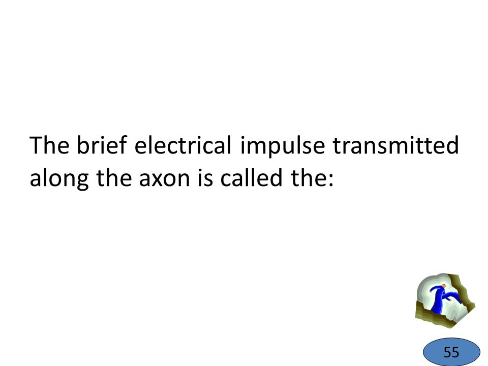 The brief electrical impulse transmitted along the axon is called the: