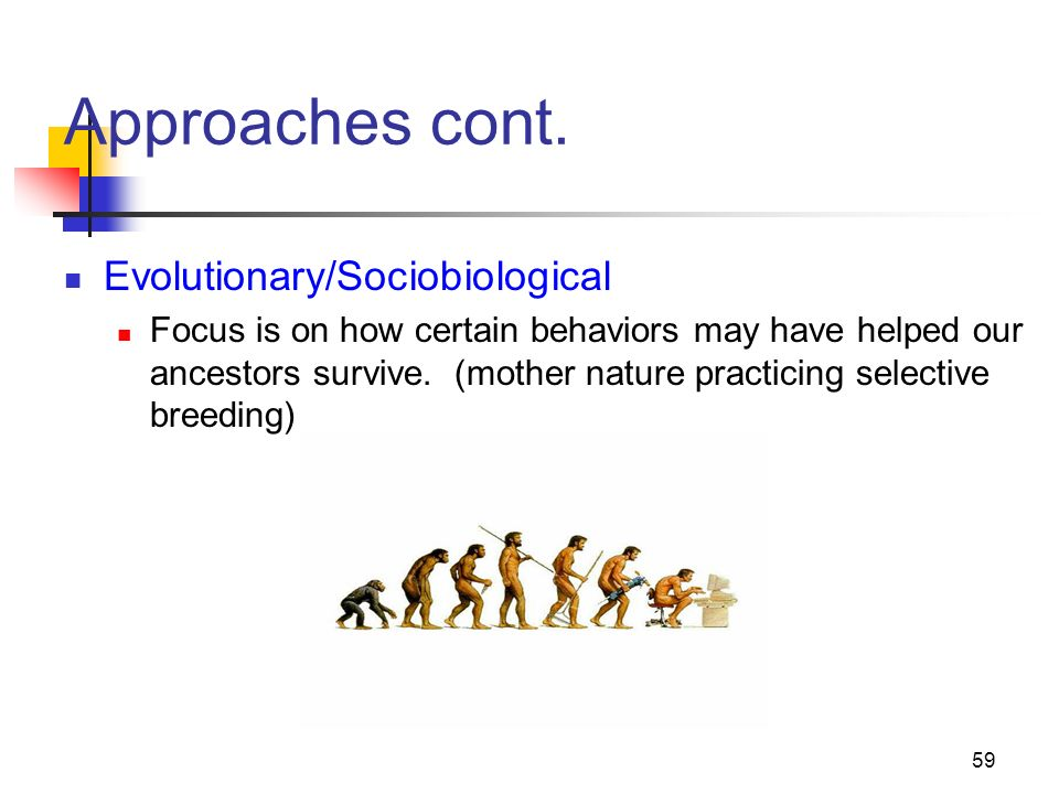 Approaches cont. Evolutionary/Sociobiological