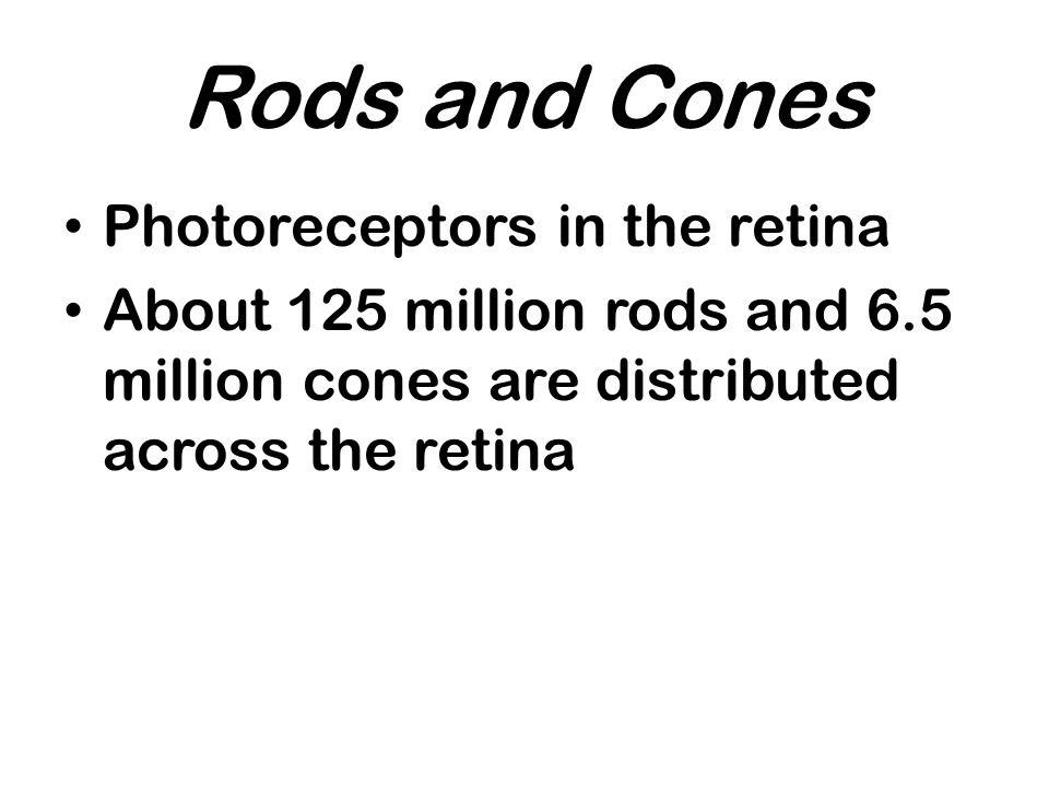 Rods and Cones Photoreceptors in the retina