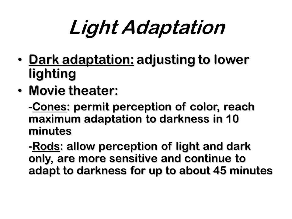 Light Adaptation Dark adaptation: adjusting to lower lighting