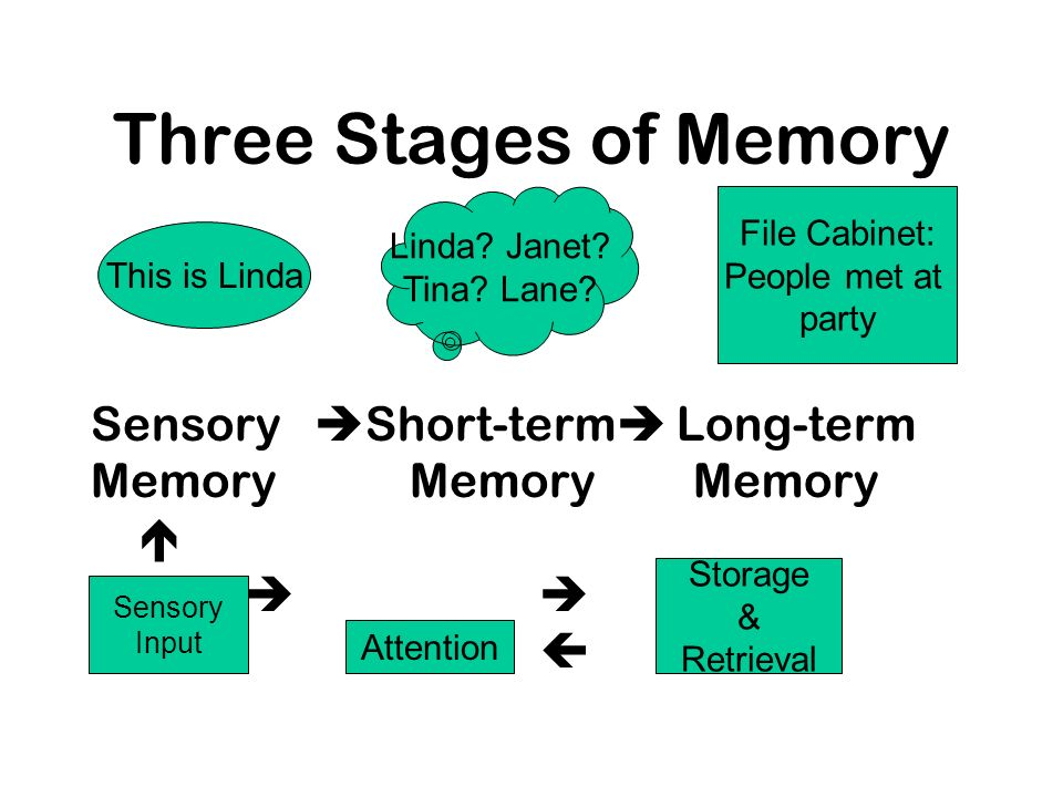 Three Stages of Memory Sensory Short-term Long-term