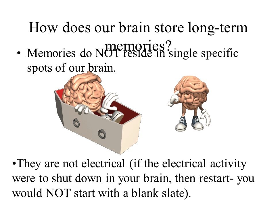 How does our brain store long-term memories